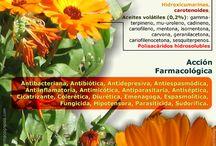 Fichas Plantas