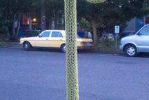 tricot urbain