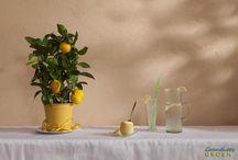 Kruiden & eetbare bloemen en planten / Gezond eten en drinken past bij een sierlijke omgeving van planten welke te combineren zijn met eten en drinken