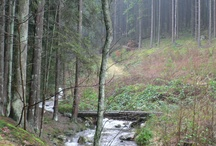 Nature of the Belgium Ardennes