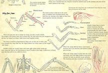 анатомия вымышленных существ