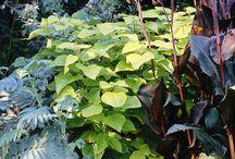 Spruce garden