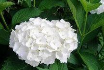 cultivando flores.....dicas