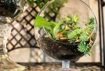 Portilla Live Plant Creations