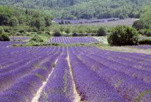Provence / So schmeckt der Sommer...