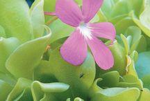altre piante