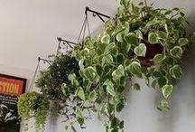 Idéias / Plantas, quintal, lavanderia, decor exterior