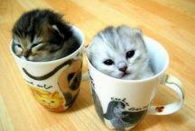 animaux mignon(cute) / je met toutes sortes de races d'animaux mais a une condition qu'ils soient mignon(cute)