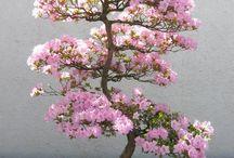 Garden | Bonsai Inspiration