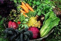 Backyard Gardening / by roylentgreen is people