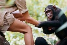 Jane Goodall - the best friend of chimpanzees