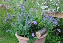 Jardinería y Cultivos