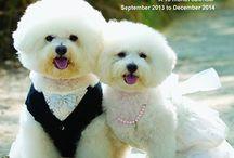 doggies / by PinkLady