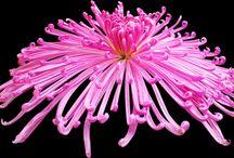 psd flowers