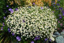 Fall 2015 plantings