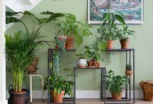 Planten in huis/serre