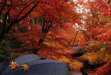 Autumn°°