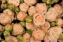 Sonia / Wedding flower suggestions