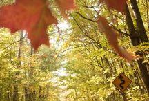 Autumn in Northern Michigan
