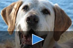 ANIMAL CRUELTY VIDEOS