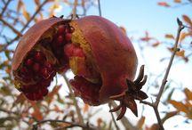 Granátovéjablko