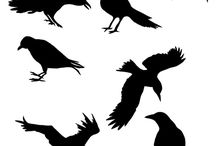 Crowes and ravens