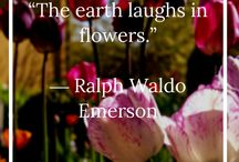 Flower Inspiration Quotes