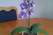 hackovana orchidej