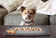Hundehvalpe / En masse nuttede hunde og hvalpe