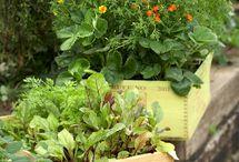Inspirational Edible Gardens