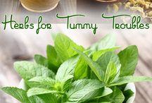 Herbs: Digestion, indigestion, nausea, vomiting