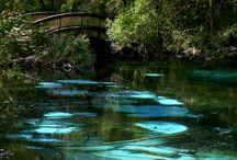 Florida Adventures / by Tara Pessagno