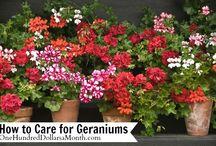 Garden & Plants