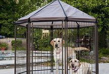 Dog Lovers Market / My Store