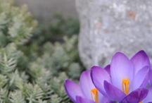 Beautiful GARDENS / Photos of my Gardens2013
