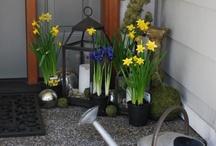 Spring has sprung! / by Cherie Eckel