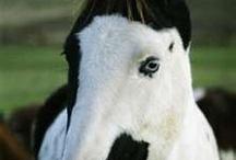 Animal - Horses / by Bora Çıracı