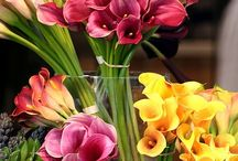 beauty of calla lillies