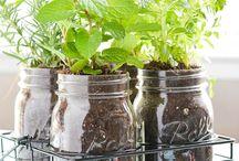 jardín y hierbas aromáticas