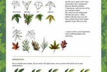 anatomy - plant