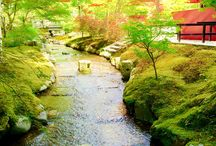 beautiful and grace Japan