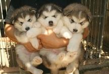 Dogs! / by Taryn Parnell