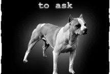 Animal Lover (Bullie <3) / by amystrawn