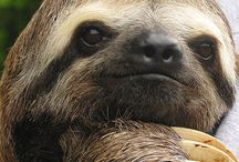 Sloths:D / by Betty Hosner