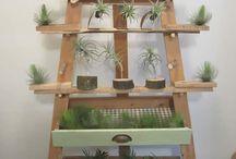 Vintage and  planten vintage and plants / Planten uit de tijd van 1970-1980