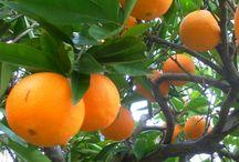 oranges recipe