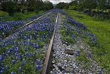 Texas, my Texas! / by Linda Franklin