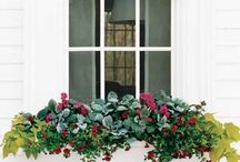 Flowers / by Linda Lewis