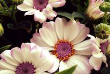 Virágok=beautiful