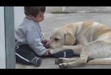 Heartwarming Animal clips